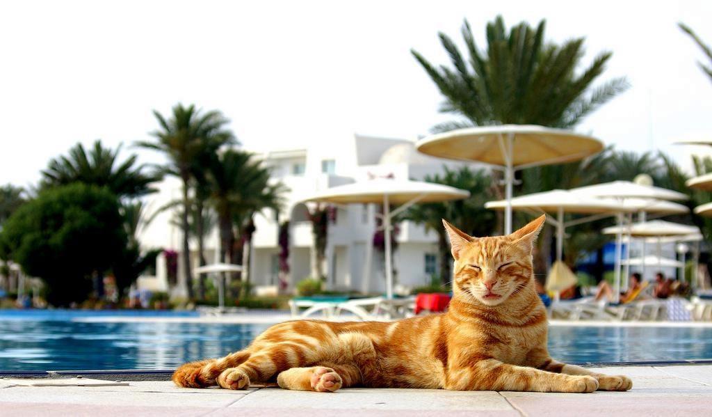 Кот на пляжном отдыхе