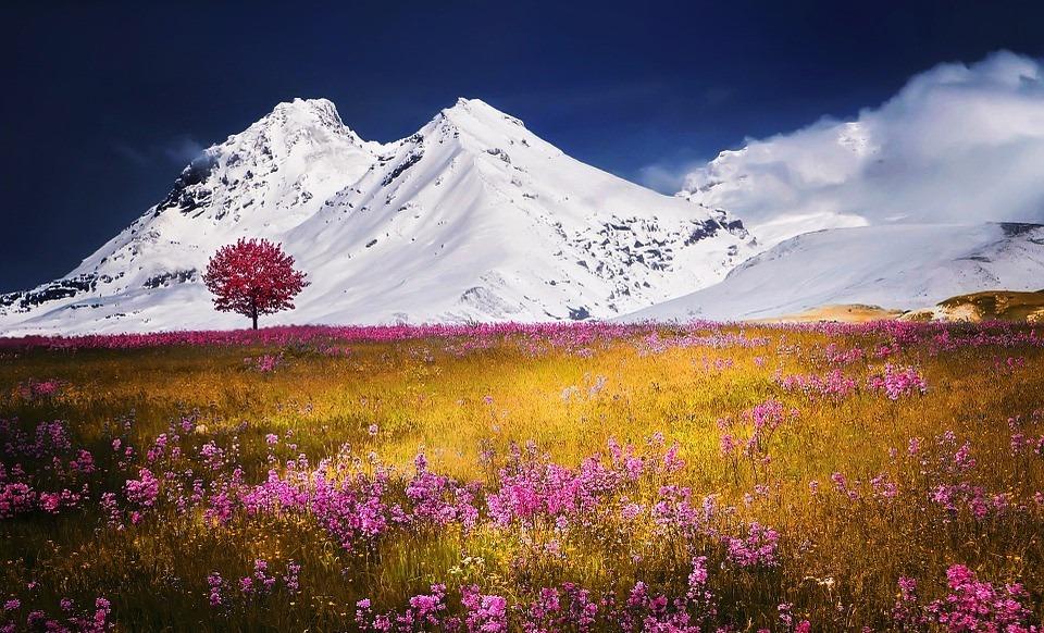 Альпиские луга с розовыми цветами