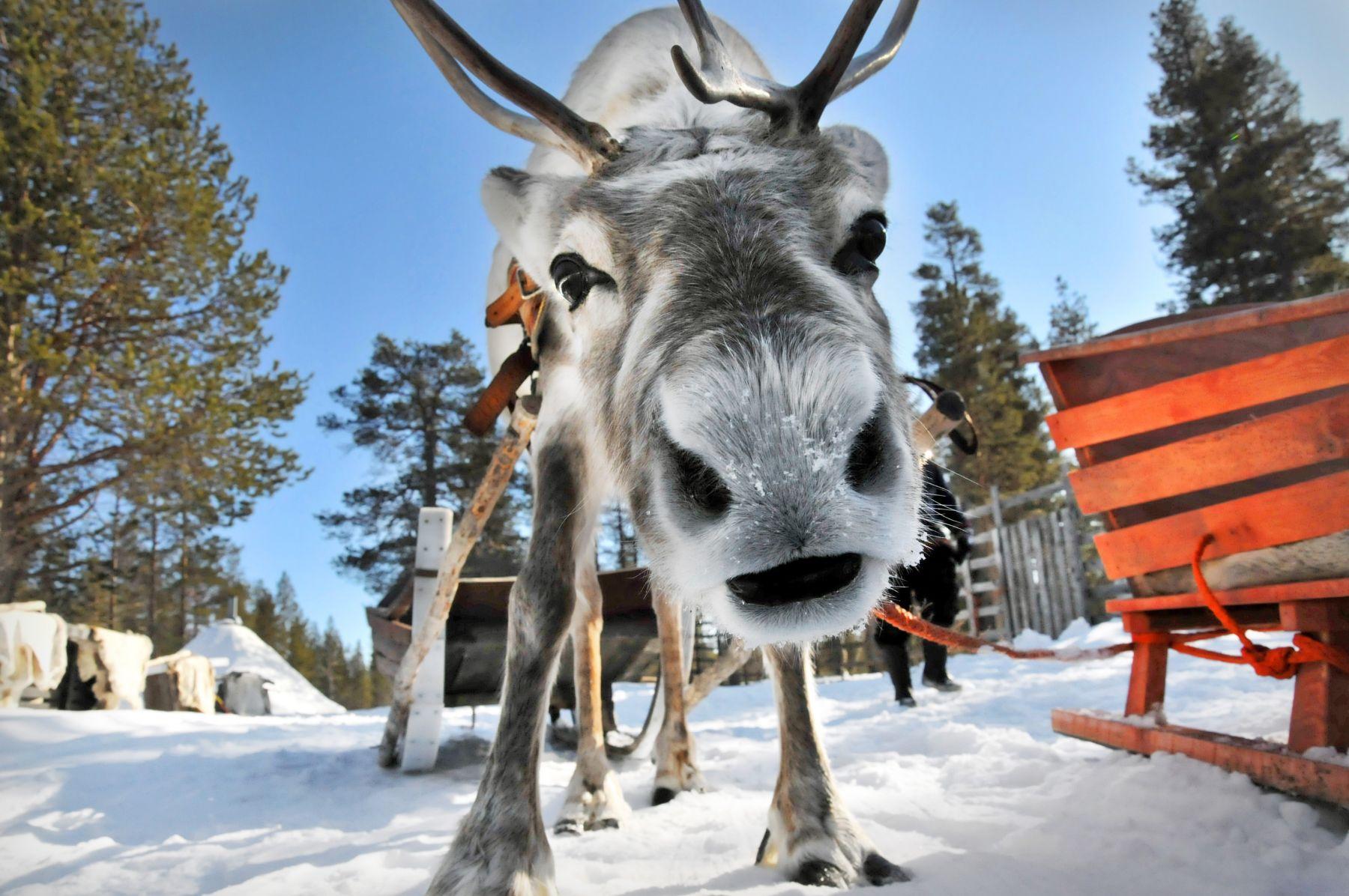 Тур в Лапландию к Санта Клаусу из Минска