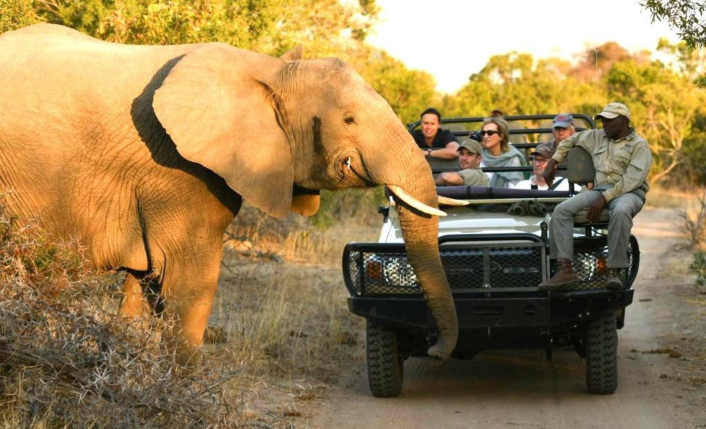 Сафари туры в Танзании